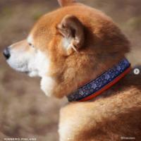핀란드 휜네로 오션 스포츠 강아지 목줄