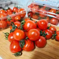 [단마토 2팩] 스윗 샤인 설탕 꿀 망고 단맛 엄청 단 스테비아 대추 완숙 방울 토마토