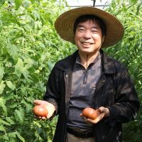 달기농장 유기농 대추방울 토마토 3Kg