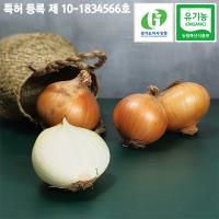 혈당개선 특허받은 유기농 양파
