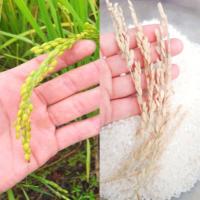 바로갓쌀 10kg 예천 일품 맛좋은 쌀 백미