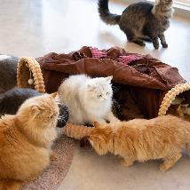 고양이 강아지 숨숨집 전문몰